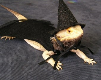 Wizarding Hat & Cape for Bearded Dragons! One size fits most.