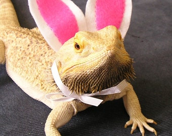 Bunny Ears for Bearded Dragons with fluffy Bunny Tail! One size fits most.