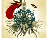 Jacques Great Rhombicosidodecahedron - Limited Edition Print - Bird print
