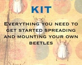Beetle Mounting Kit for Beginners, with Real Beetles and Tools