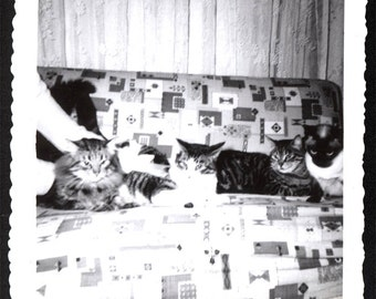 vintage photo 4 CAts on the Couch Snapshot 1960 Geometric fabric