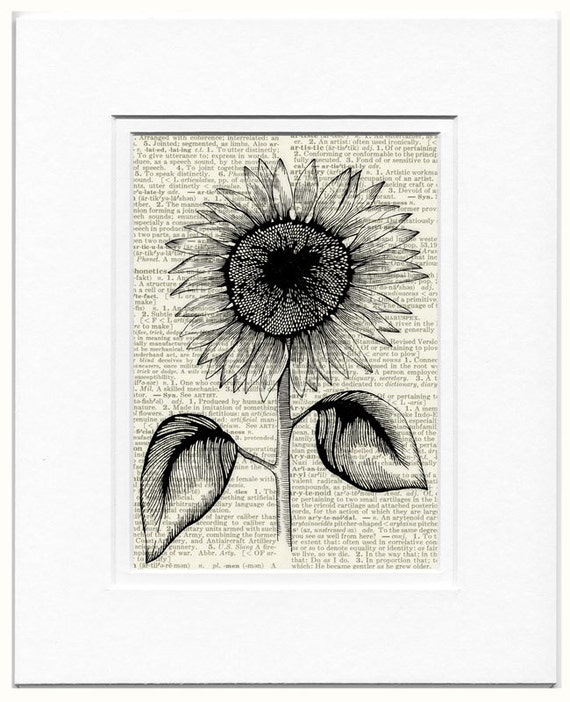Sunflower,1950s etched-style print