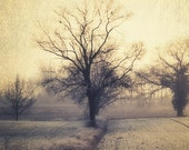 Landscape photography, Nature photography, French country, Tree decor, Fall art