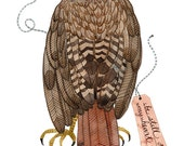 red tailed hawk bird specimen print by golly bard