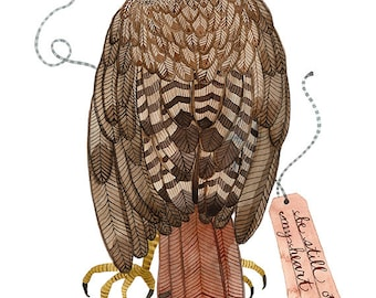 red tailed hawk bird specimen print by golly bard