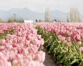 Floral Photography, Pink Tulips in Field, Fine Art Photograph, Romantic Home Decor, Large Wall Decor