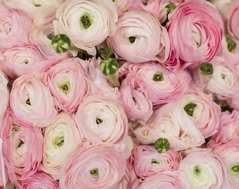Paris Photograph - Pink Ranunculus in Paris Flower Shop, Large Wall Art, Romantic French Home Decor
