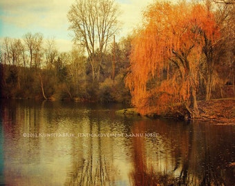 WILLOW Original Color Art Landscape Photograph