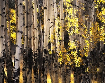 Aspen Trees Aspens Fall Colorado Autumn Forest Leaves Yellow Rustic Cabin Lodge Photograph