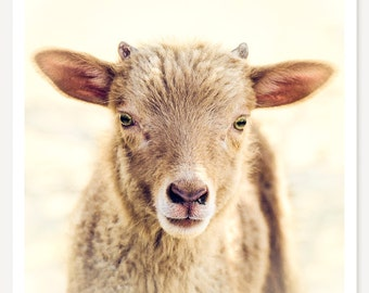 Little Lamb - Baby Animal Photograph - Cute Farm Animal - Lamb Photo - Nursery Art - Kids Decor - Rustic Country Art