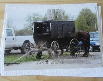 Amish Buggy Photography