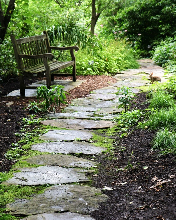 Woodland Decor - Bunny Print - Natural Emerald Green Photograph - Saint Louis Botanical Art - English Garden Photography - Bench