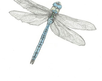 Print - The Emperor - Dragonfly Pencil Drawing