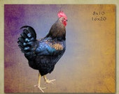 Rooster, Farmhouse, Country, Nature, Kitchen Decor, Bird Photography, Animal Photography, Farm, Wall Art, Art,  Photography, Chicken, Father