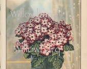 Cineraria Hybrida. 1926 country cottage garden old fashioned botanical color lithograph print