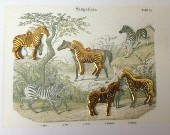 Baby Zebra Charm ( 4 pc)