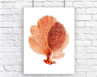 Large Sea Fan Coral Print Red Orange Nautical Vintage Style Art Beach House Decor