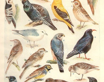 Vintage Antique 1920 Bird bookplate original lithograph art print illustration 3021