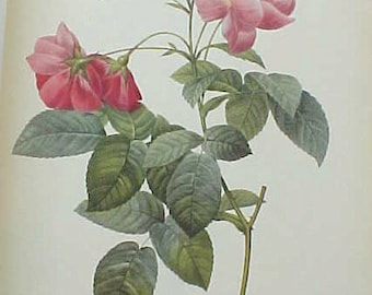"""Wonderful Vintage Book: """"Pierre Joseph Redoute Roses 2-With 24 Full Page Rose Prints"""