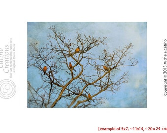 Robins Birds in Tree Branches Blue Cloudy Sky Tree Branches Bird Silhouettes Moody Sky Woodland Birds Print Rustic Nature Print