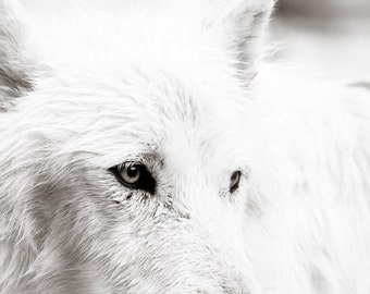 Wolf Art - Wildlife Photography  - Black and White Photo -  Fine Art  Photography - Wildlife Art - Animal Photography