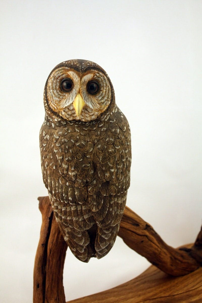 Spotted Owl Wood Carving Hand Carved Sculpture