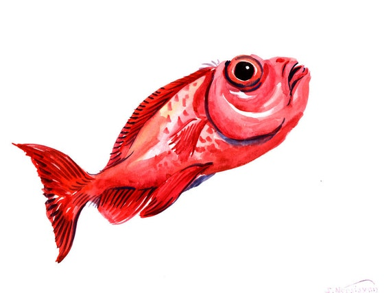 Red fish priacanthidae original watercolor painting 9 x 12 for Fish eyes in paint