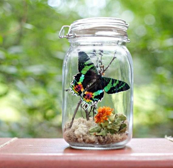 Wedding Gift Ideas For Nature Lovers : Gift for Nature Lover Butterfly Terrarium by TheAmateurNaturalist