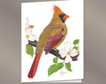 Cardinal Bird Cards -- Illustration of Female Cardinal Bird, All Occasion, Blank Inside