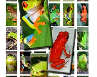 Frog Toad Rainforest Reptile Wild Zoo Animal Digital Images Collage Sheet 1x2 inch Rectangles Domino Commercial INSTANT Download RD28