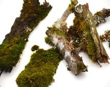 5 Bark Pieces with Natural Lichens and Mosses  for Bonsai, Crafts, Terrariums, Rustic Woodland Decor, Birdhouse Decor, Cedar, Maple or Fir