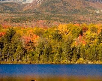 Moose Fall Katahdin-  8x10 Fine Art Nature Willdlife Photography of Male Moose in Fall near Katahdin Mountain, Baxter State Park Maine