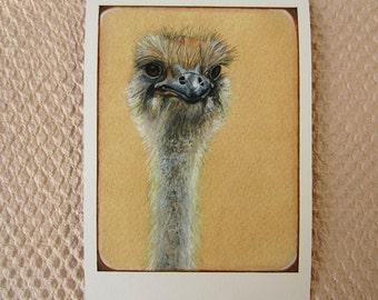 SALE!!! Ostrich Portrait Art Print 5x7 20% OFF, Bird Artwork, Bird Wall Art