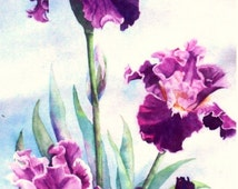 Crystal Ribbon Iris Note Card with envelopes.  Printed from my original painting. Blank inside. 5 x 7 inch size