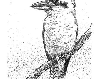 Kookaburra sketch original drawing 5x7 inches (12x18cm) pen and ink, natural history, original art