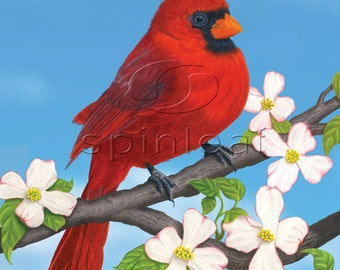 Cardinal Art Print, Illustration of Male Cardinal on blue