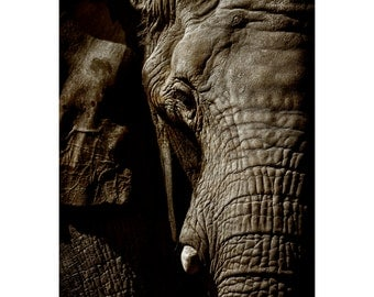 Sepia Elephant Print, Black Mat, Sunset, Nature Photography, Animal Photo, Zoo, African, Fine Art Photography, 5x7, 8x10, 11x14