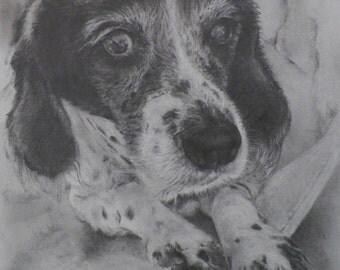 "Custom Pet Portrait, 8""x10"""
