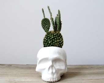 Halloween Skull Ceramic Planter - perfect for cactus succulent or air plant