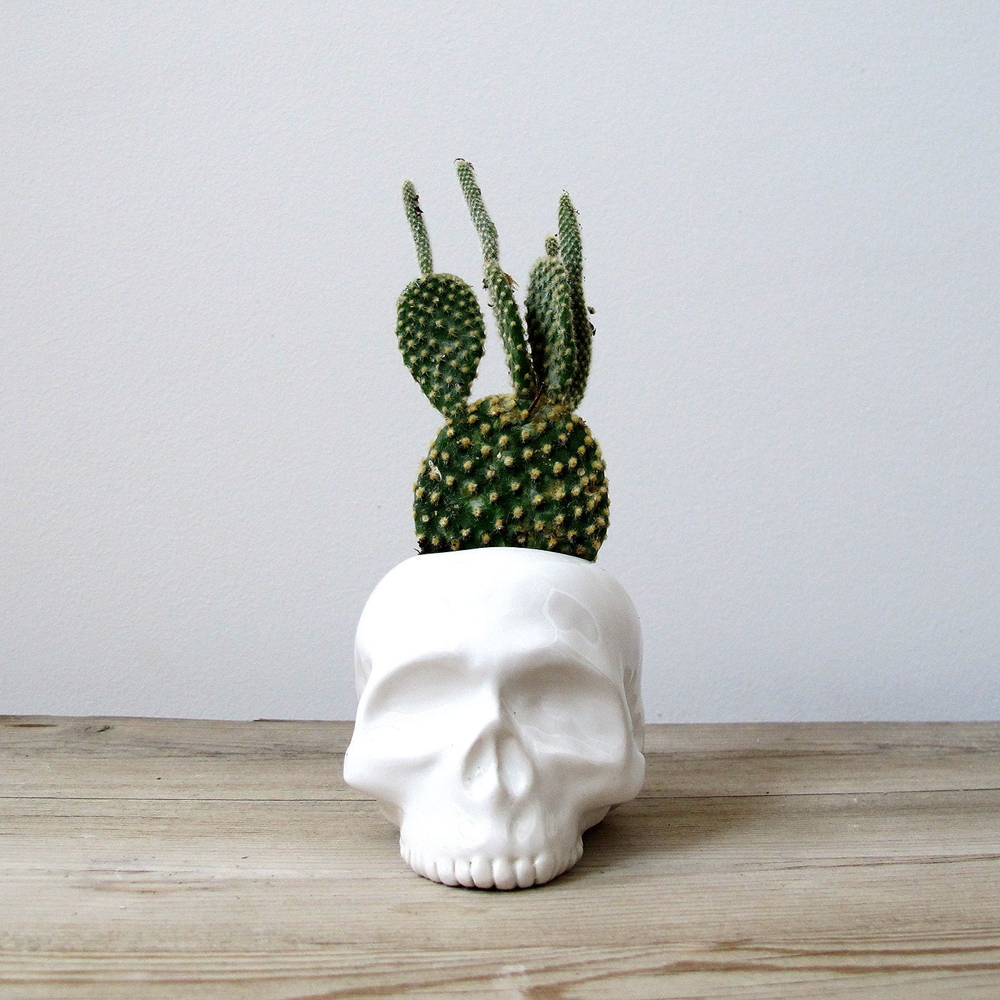 Human skull ceramic planter perfect for cactus succulent or - Vase decoration interieur ...