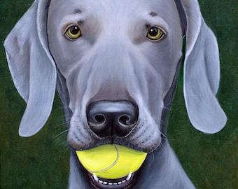 Weimaraner Dog with Tennis Ball Fine Art Prints by Carol Iyer