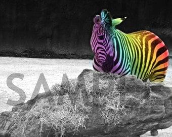 Original Digital Photo Rainbow Zebra JPEG