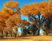 Autumn Rustic Landscape Photography Desert Sagebrush Instant Download  Digital Download Commercial Use Digital Graphics