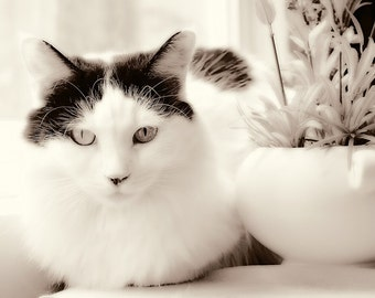 Printable Art Instant Download Black and White Magpie Cat Sepia Home Decor Digital Download Photograph Commercial Use