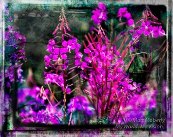 fine art print fireweed digital art composite