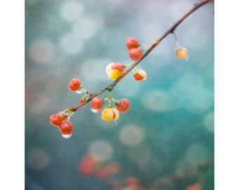 Red Berries Photograph, Nature Photography, Red on Turquoise, Woodland Art, Zen Art, Farmhouse Decor