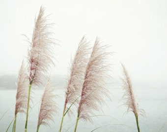 Nature photography wild sea grasses dusty rose pale pink white minimal coastal nature wall art  fine art nature photography  'Wild Pampas'
