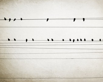 "Birds on wires minimal modern gray bird art power lines black white abstract sepia photography urban  bird art  ""Hymn"""
