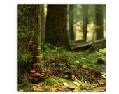 Forest Floor Photograph Forest Floor Print...Affordable Home Photography Prints Nature Photography Decor Nature Lover Woodland Scene