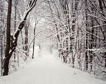 woods snow winter landscape photography nature fine art photography home decor office decor branches